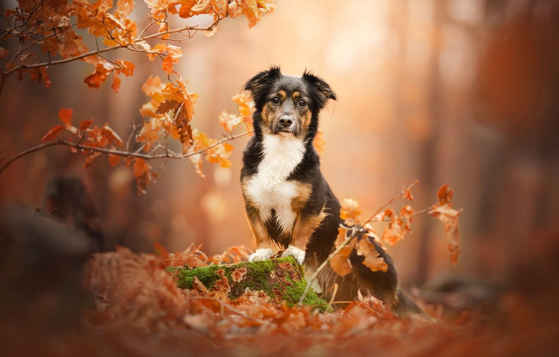 Photo wallpaper autumn, branches, stump, dog, bokeh