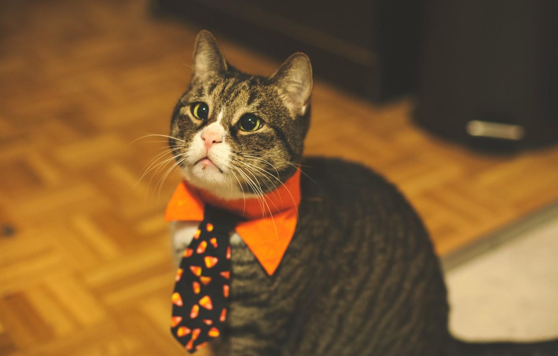 Photo wallpaper cat, tie, cute, funny, pet