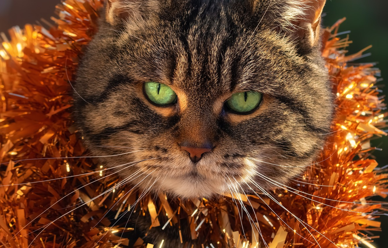 Photo wallpaper cat, face, new year, tinsel