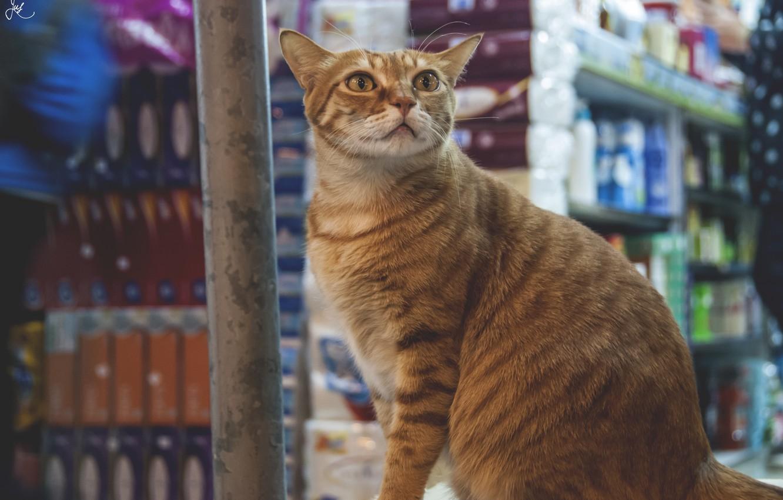 Photo wallpaper eyes, cat, look, wool, red