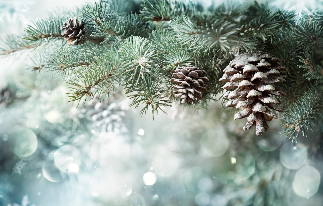 Photo wallpaper winter, snow, branches, nature, background, spruce, New year, needles, snowfall, bumps, coniferous, bokeh, composition, spruce