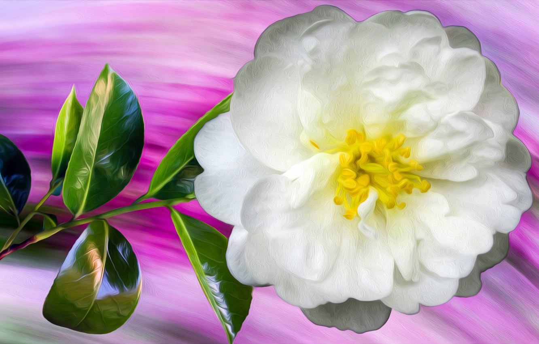 Photo wallpaper Graphics, Flower, White, Briar