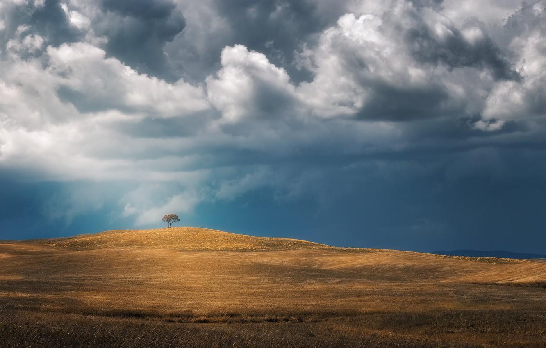 Photo wallpaper field, the sky, tree