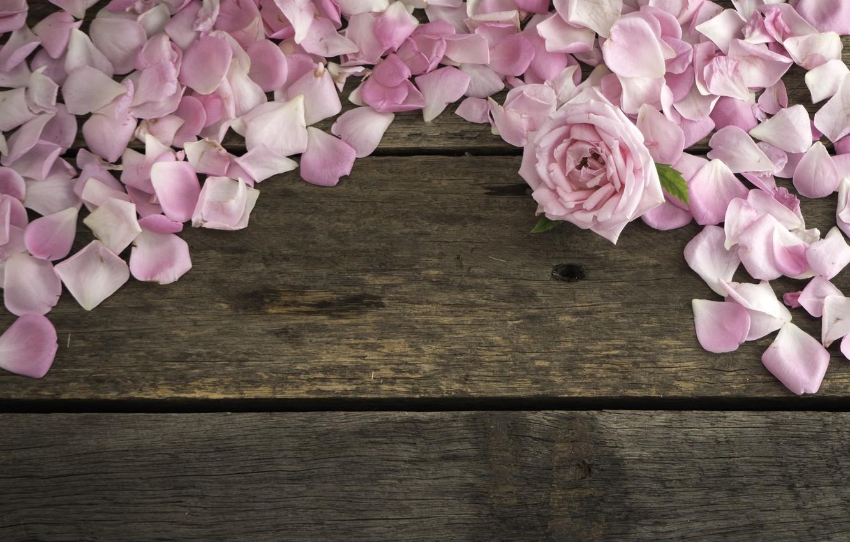Photo wallpaper flowers, roses, petals, pink, wood, pink, flowers, petals, roses
