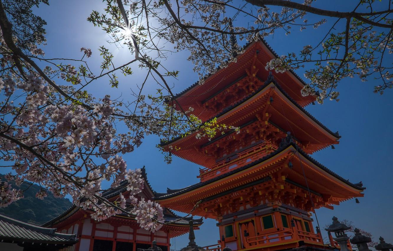 Photo wallpaper spring, Japan, temple