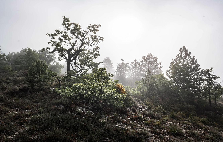 Photo wallpaper fog, tree, morning