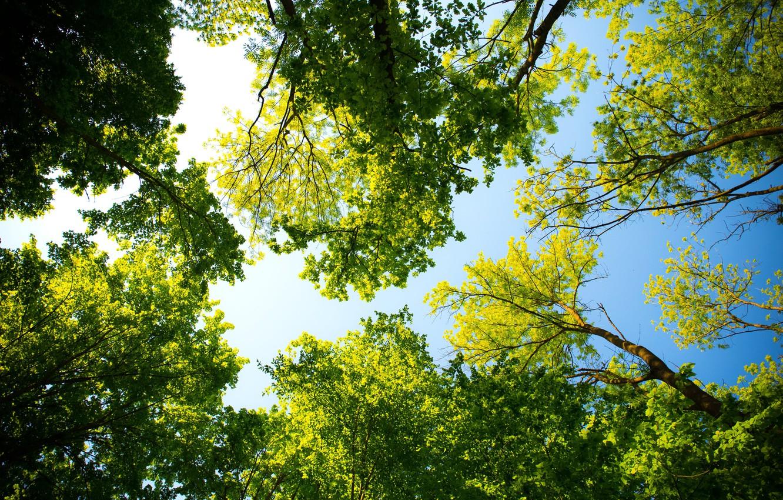 Photo wallpaper the sky, leaves, light, Trees