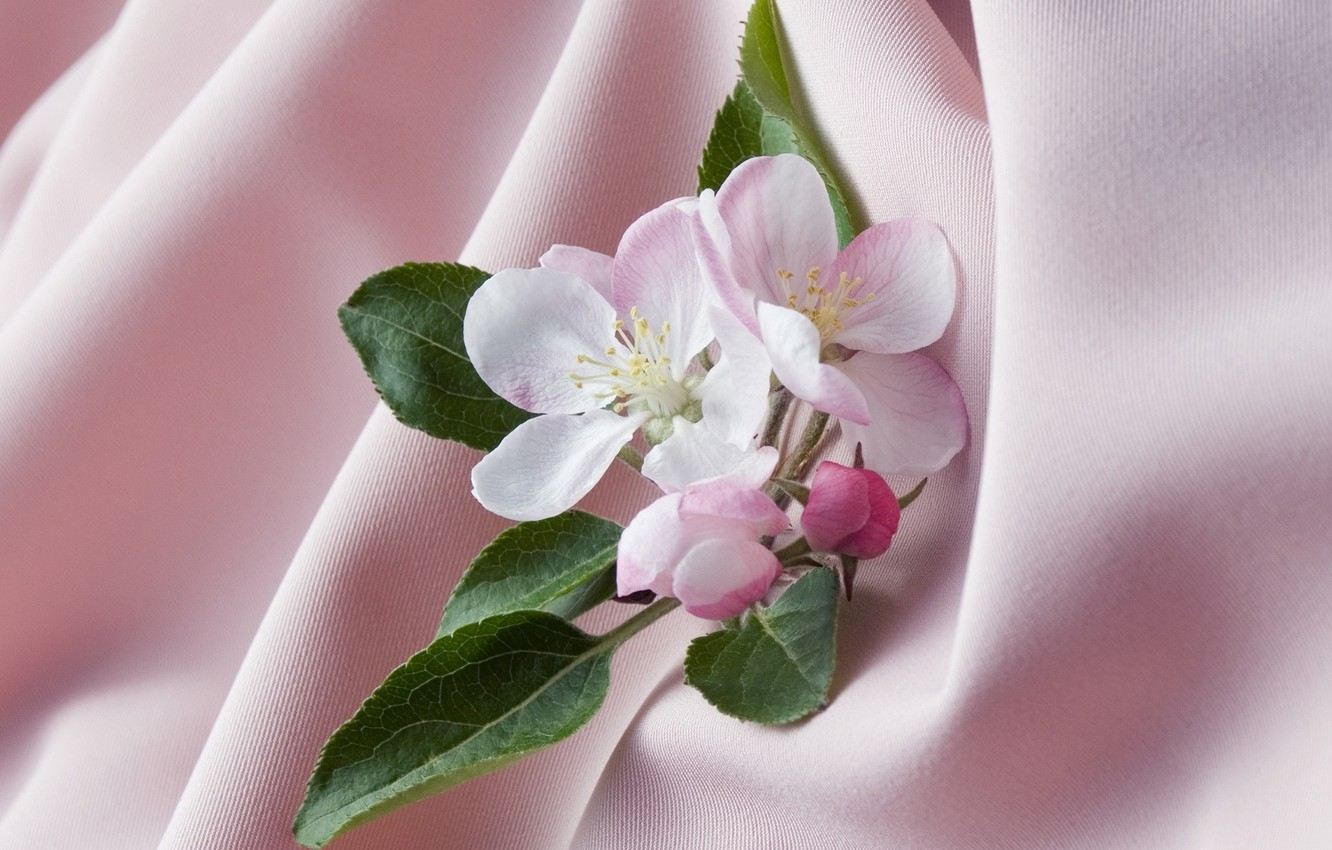 Photo wallpaper leaves, background, Wallpaper, petals, stamens, fabric, picture, Apple blossoms, shades of pink, the folds of …