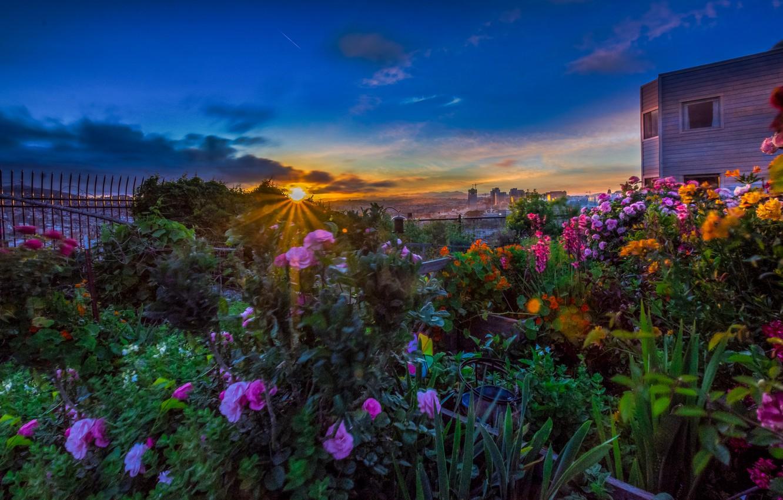 Photo wallpaper the sun, rays, landscape, sunset, flowers, the city, CA, San Francisco, USA, Potrero Hill, Potrero …