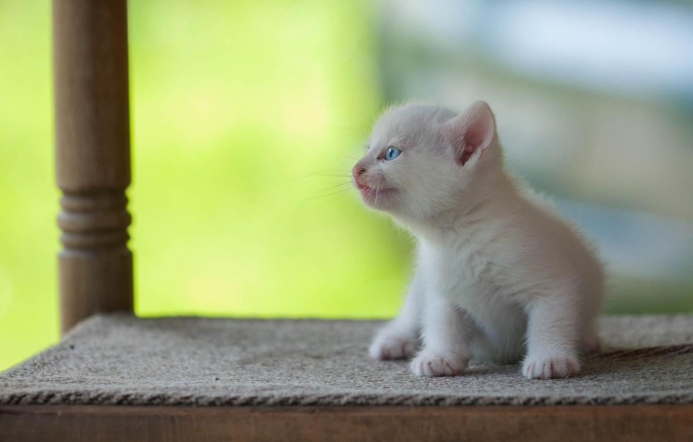 Photo wallpaper white, baby, kitty