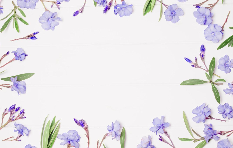Wallpaper Flowers Background Frame Purple Flowers Violet Frame Floral Images For Desktop Section Cvety Download