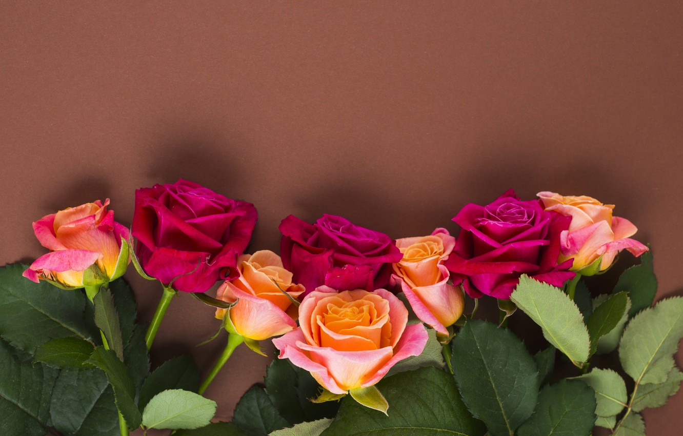 Photo wallpaper flowers, roses, yellow, pink, buds, yellow, pink, flowers, romantic, roses, cute