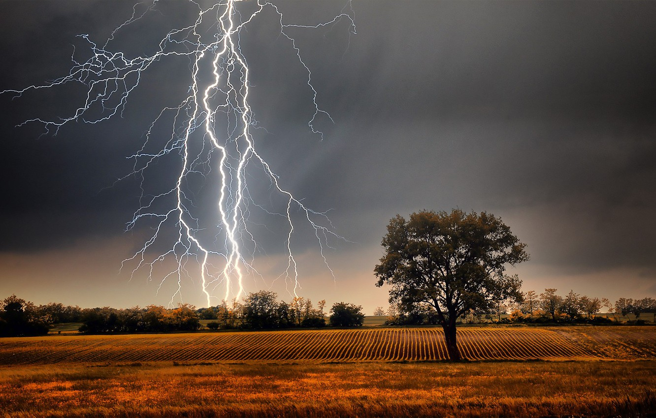 Photo wallpaper grass, storm, field, landscape, Lightning, nature, clouds, tree, plants, farm