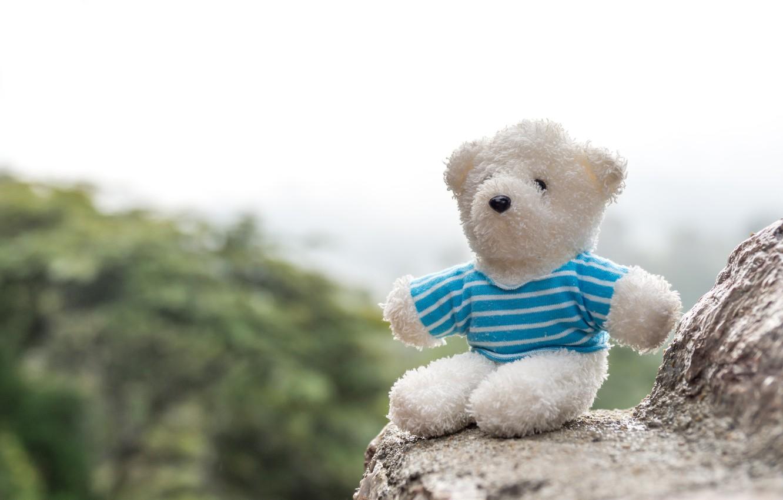 Photo wallpaper rocks, bear, bear, teddy, lonely, lonely