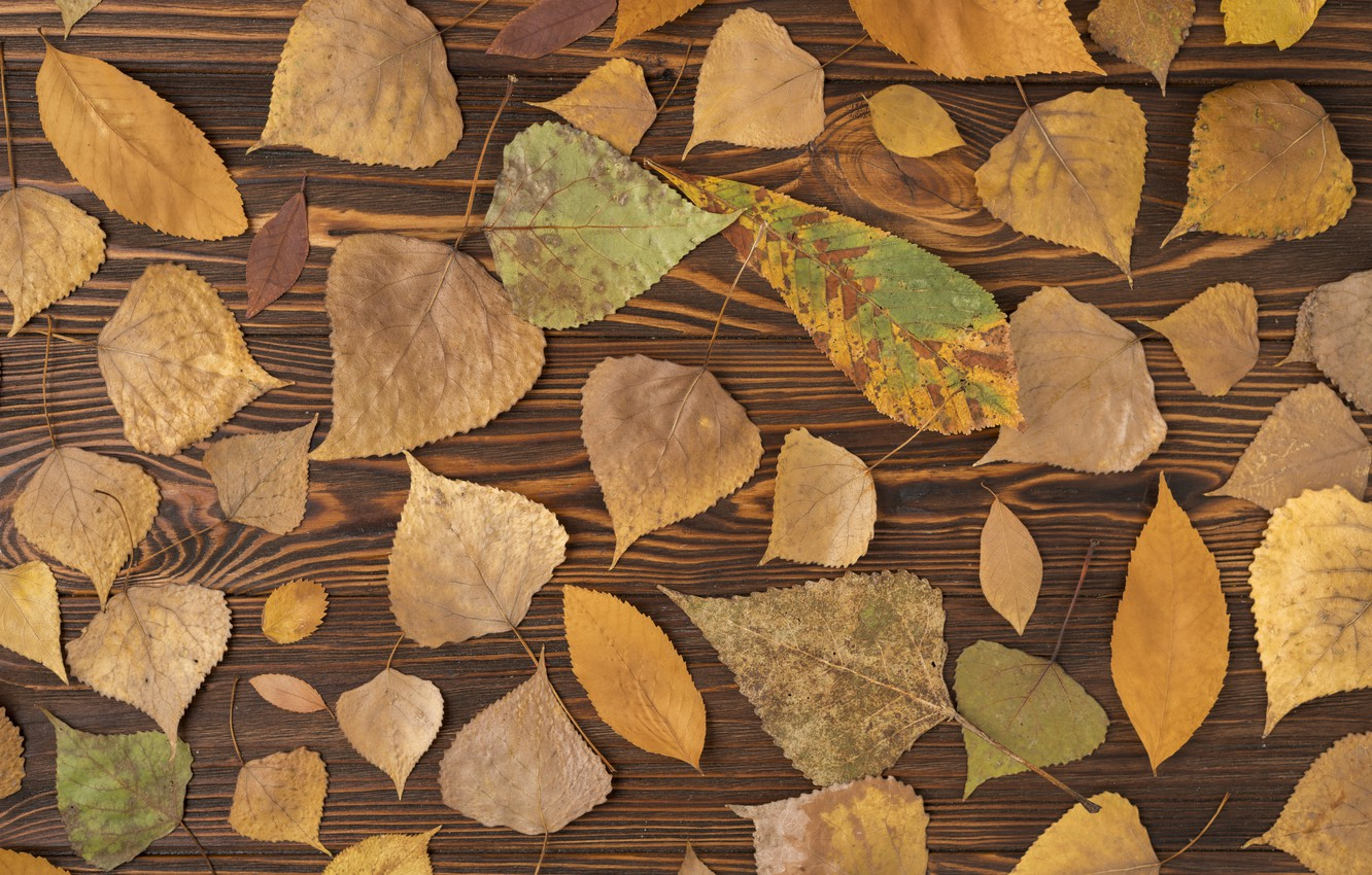 Photo wallpaper autumn, leaves, background, tree, colorful, wood, background, autumn, leaves, autumn