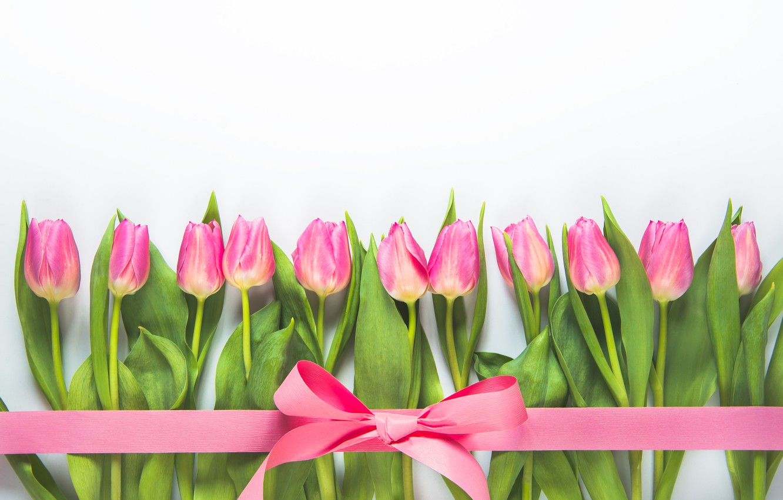 Photo wallpaper flowers, background, tape, tulips, pink, Diliana Nikolova