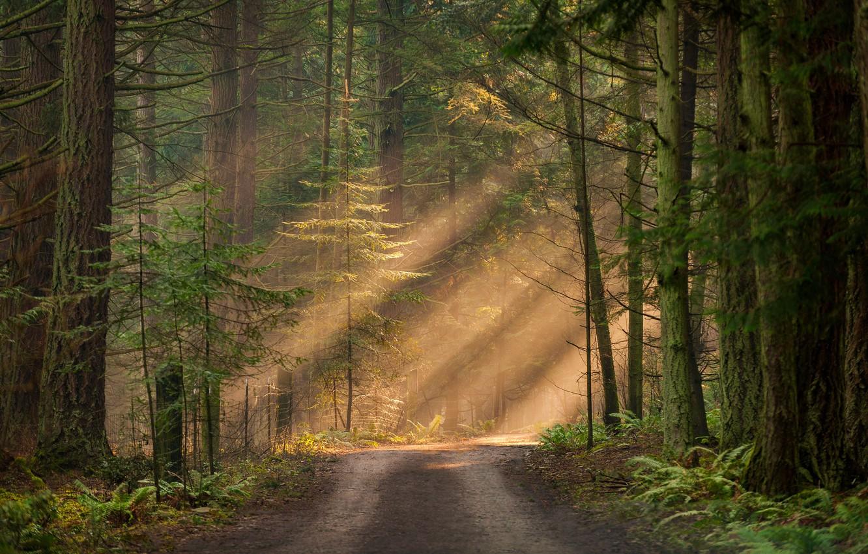 Photo wallpaper forest, the sun, light, trees