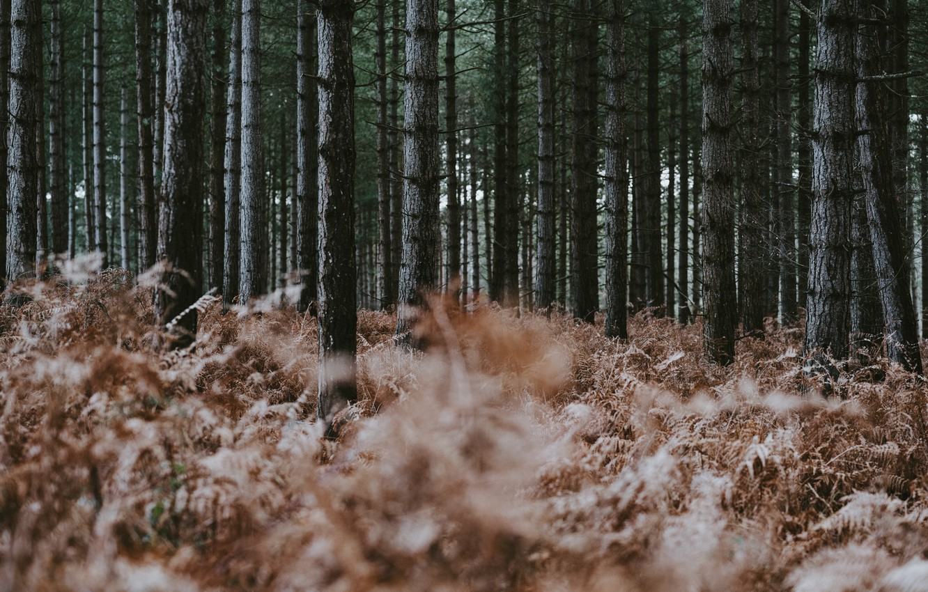 Photo wallpaper forest, trees, nature, dry, fern