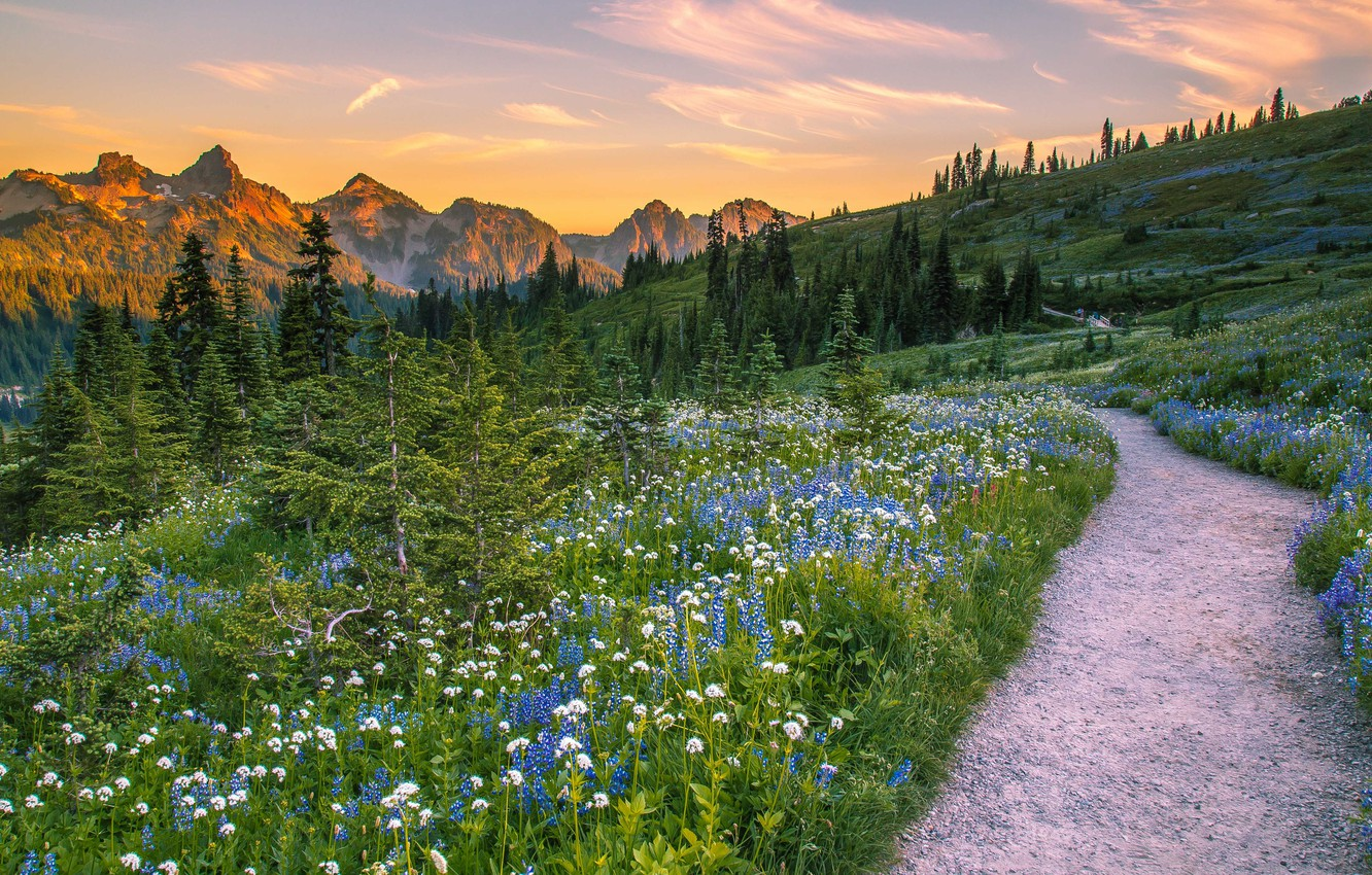 Photo wallpaper trees, landscape, flowers, mountains, nature, USA, grass, path, meadows, national Park, National Park, Mount Rainier, …