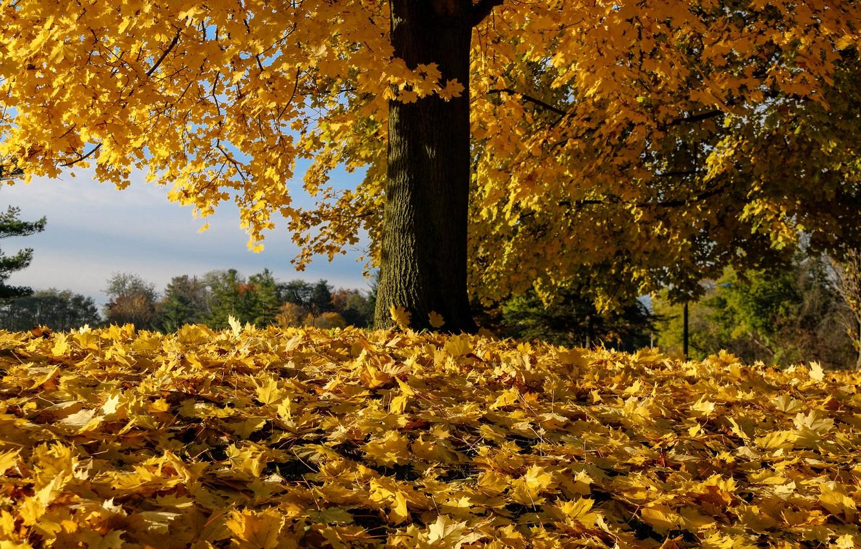 Photo wallpaper autumn, leaves, tree, fallen leaves