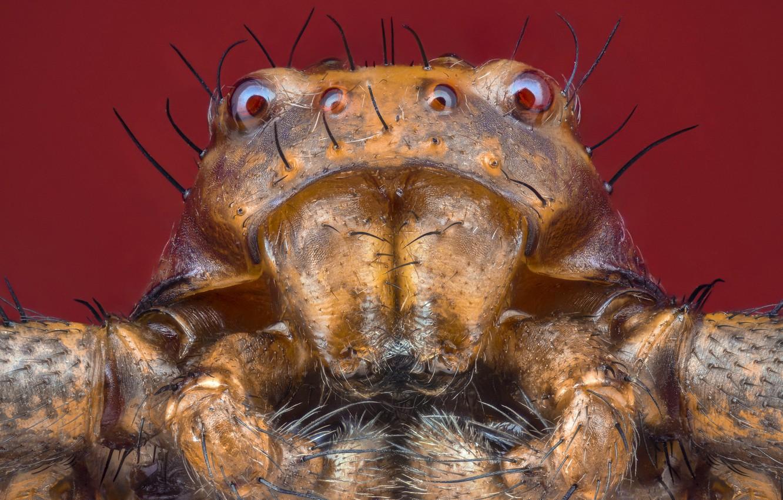Photo wallpaper macro, nature, spider