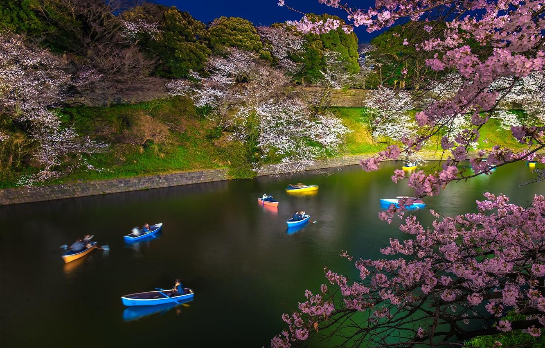 Photo wallpaper boat, spring, Japan, Sakura