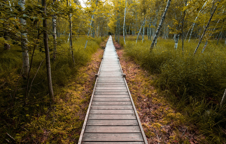Photo wallpaper road, nature, Park