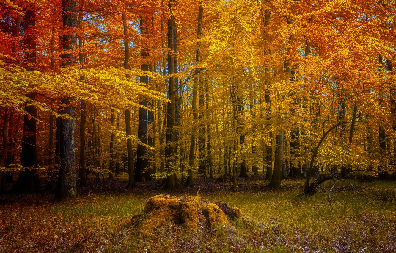 Photo wallpaper autumn, forest, nature