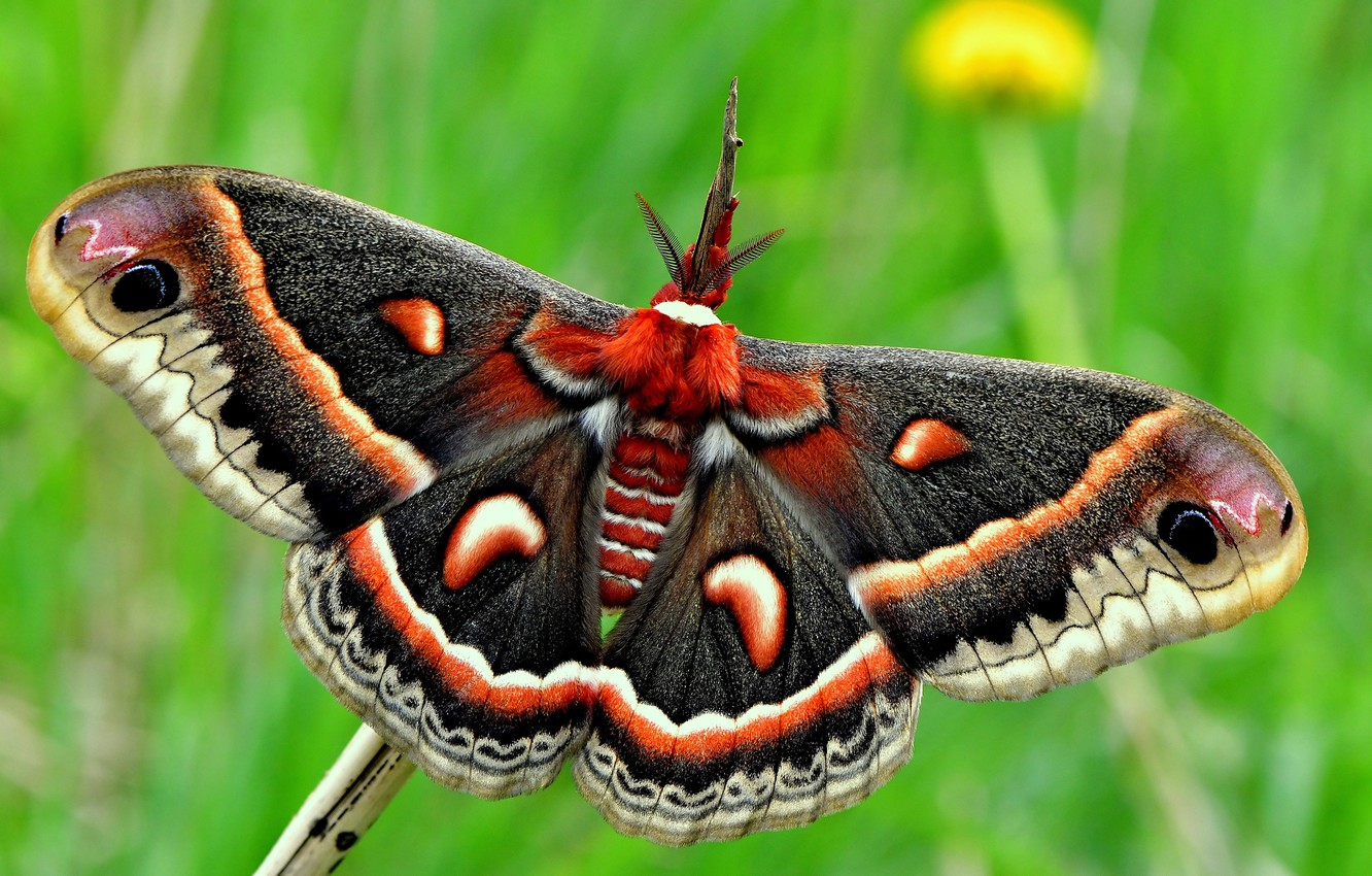 Photo wallpaper summer, macro, green, background, butterfly, wings, insect, bright, Emperor moth
