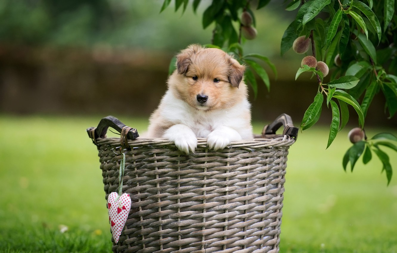 Photo wallpaper greens, summer, grass, look, leaves, branches, nature, lawn, basket, glade, heart, legs, dog, small, garden, ...