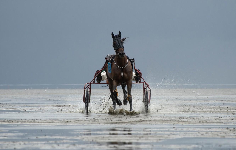 Photo wallpaper horse, race, sport, running, team