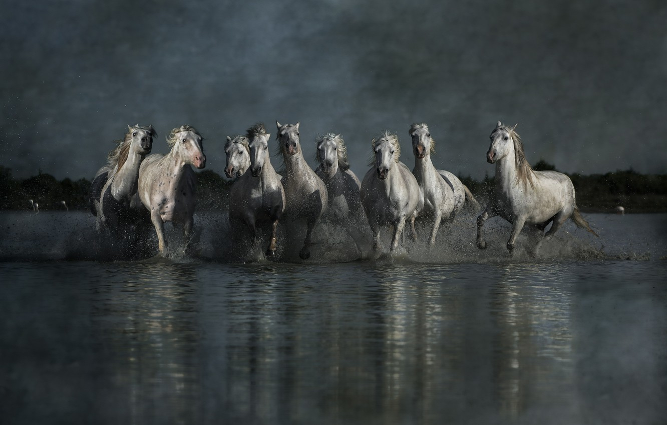 Photo wallpaper the sky, water, light, squirt, reflection, overcast, shore, horses, group, the evening, horse, running, white, ...