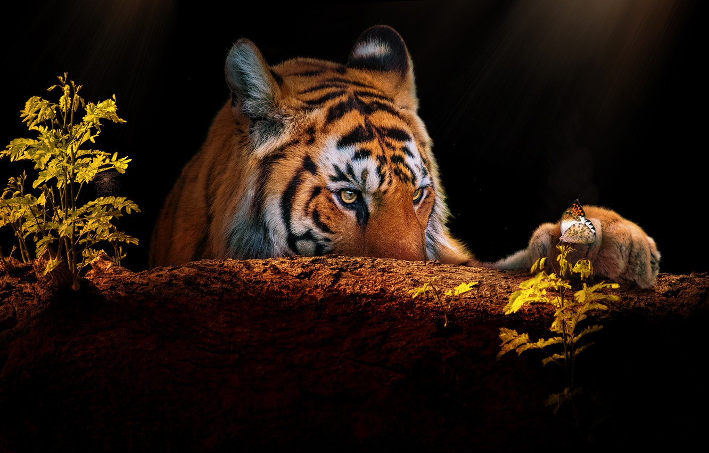 Photo wallpaper look, face, tiger, rendering, butterfly, paw, portrait, plants, log, black background, photoart