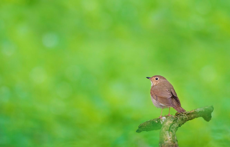 Photo wallpaper nature, bird, branch, Komarovka