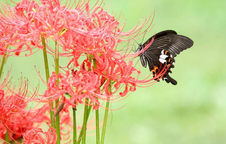 Photo wallpaper flower, macro, flowers, stems, pattern, butterfly, Lily,