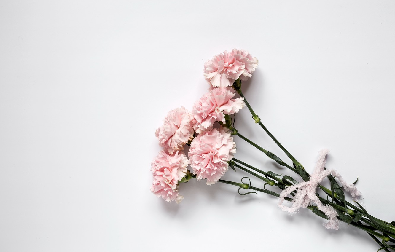 Wallpaper Flowers Pink Wood Pink Carnation Flowers Images For