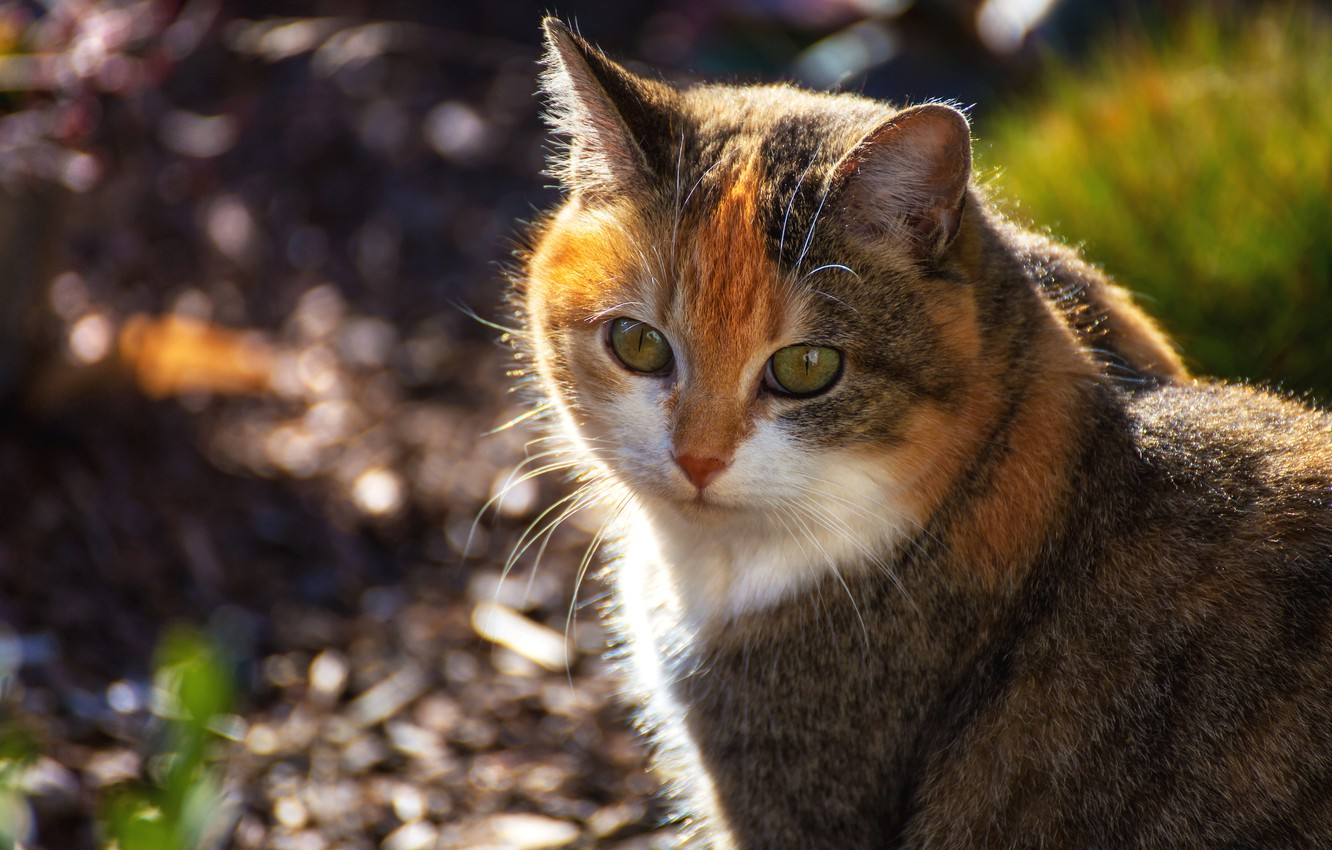 Photo wallpaper cat, look, face, background, portrait, red, bokeh, spotted, motley