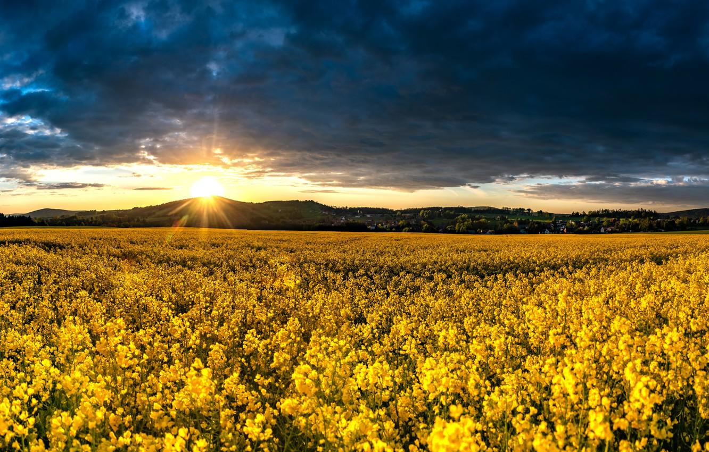 Photo wallpaper field, the sky, sunset, clouds, Germany, Germany, rape, Saxony, Saxony, Upper Lusatia, Upper Lusatia