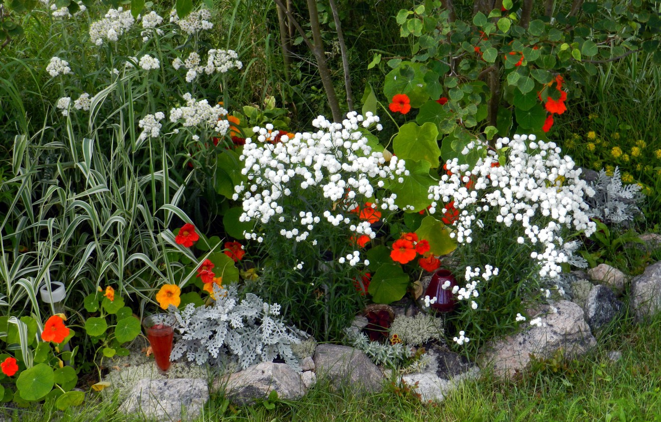 Photo wallpaper nature, flowerbed, a glass of wine