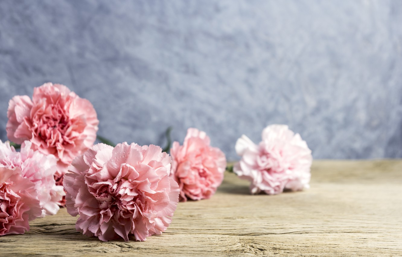Wallpaper Flowers Petals Pink Wood Pink Flowers Beautiful Clove Carnation Images For Desktop Section Cvety Download