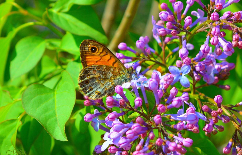 Photo wallpaper Macro, Butterfly, Flowering, Macro, Butterfly, Flowering