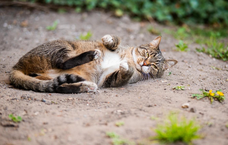 Photo wallpaper summer, cat, lies