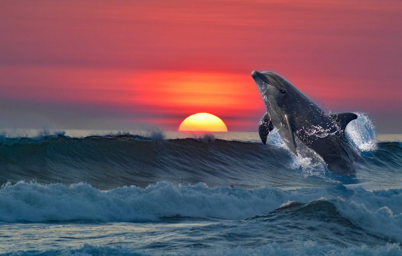 Photo wallpaper sea, sunset, Dolphin, rendering