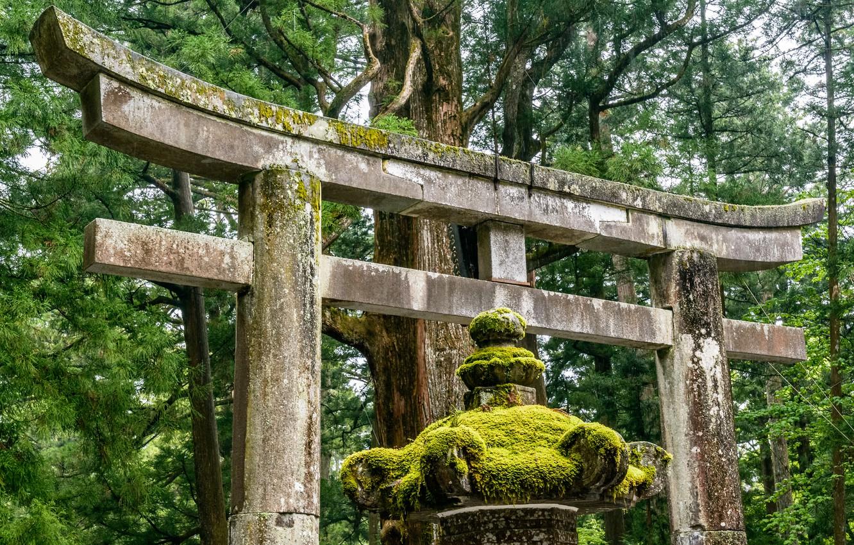 Photo wallpaper Nature, Japan, Forest, Torii