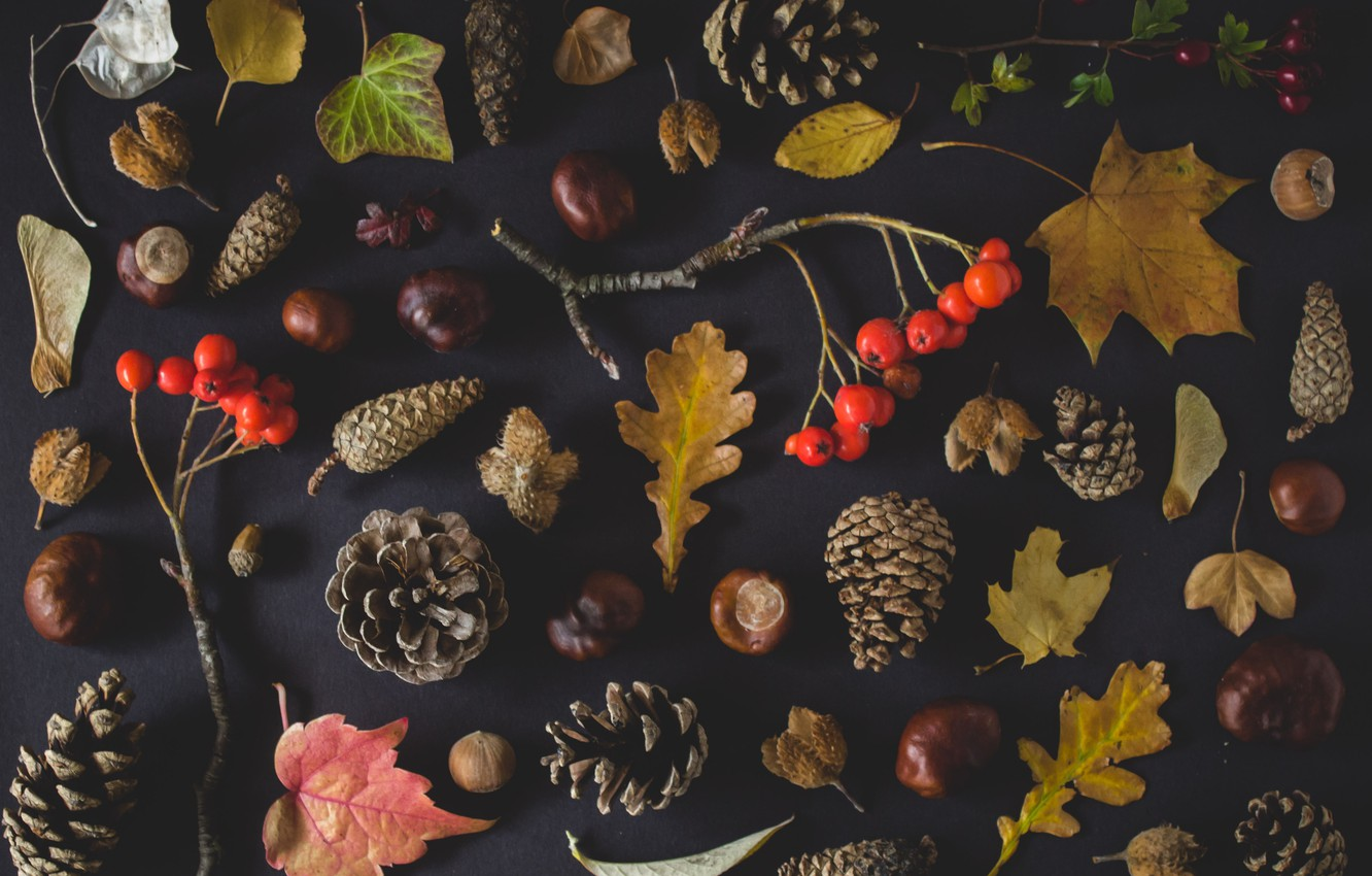 Photo wallpaper autumn, leaves, nuts