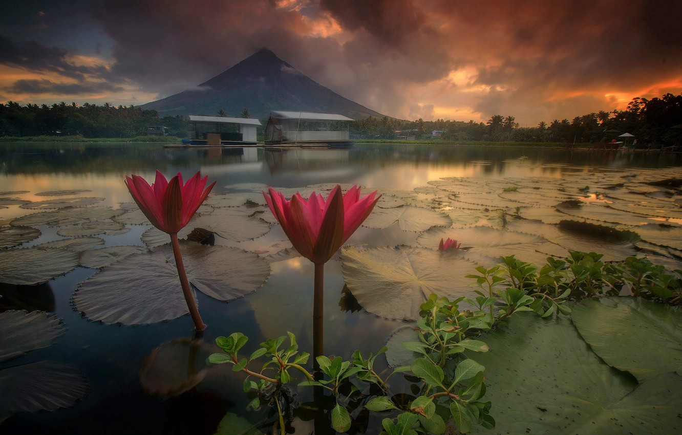 Photo wallpaper landscape, flowers, nature, lake, dawn, Lily, morning, the volcano, water lilies, Philippines