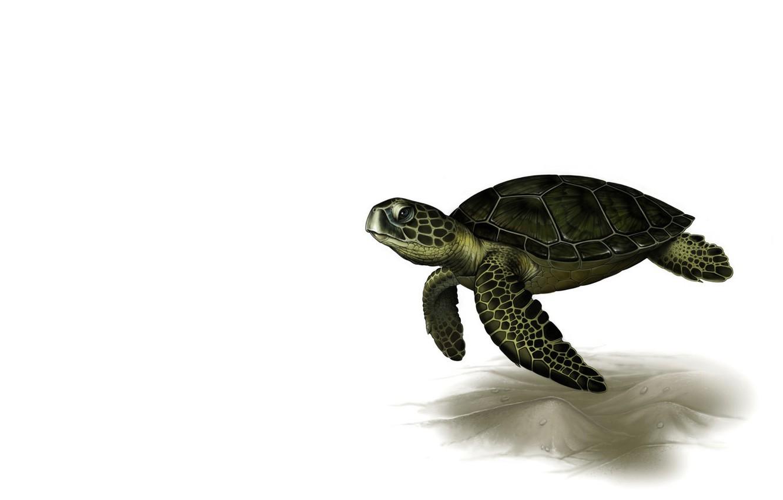 Photo wallpaper rendering, turtle, art, Leslie Casilli, Sea Turtle