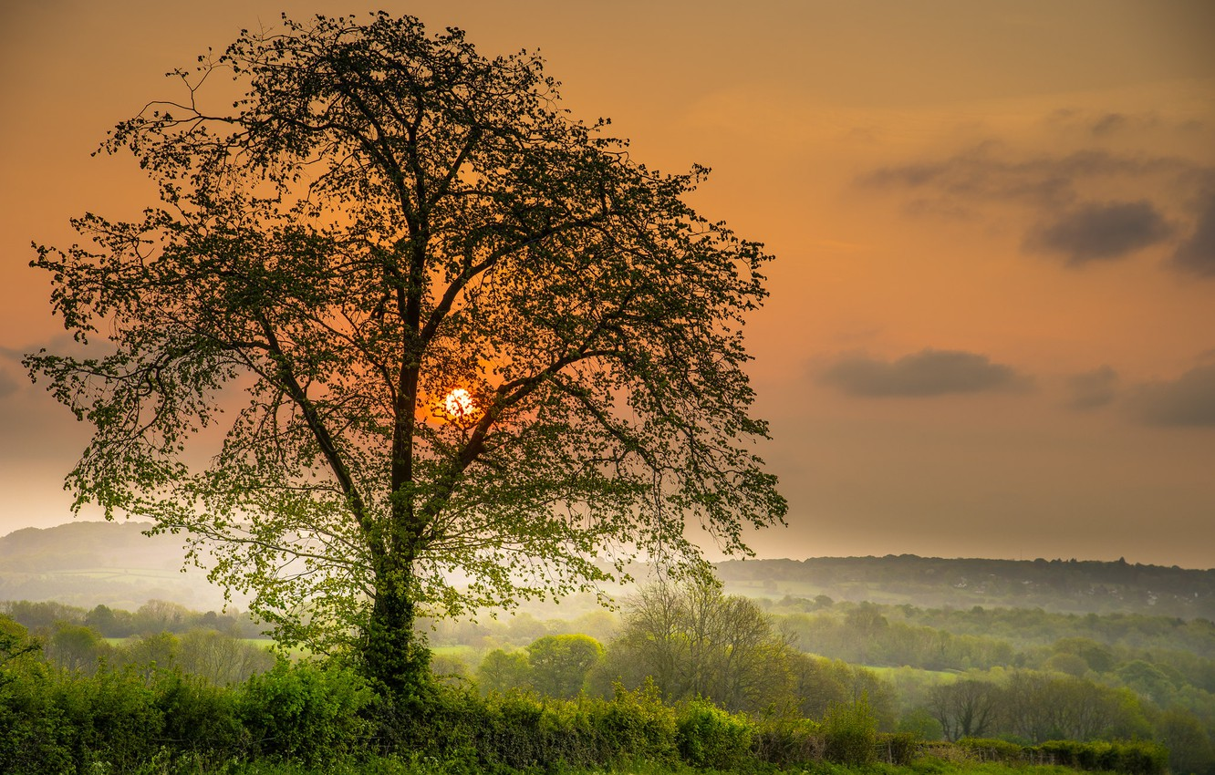 Photo wallpaper sunset, photo, tree, the sun, the sky