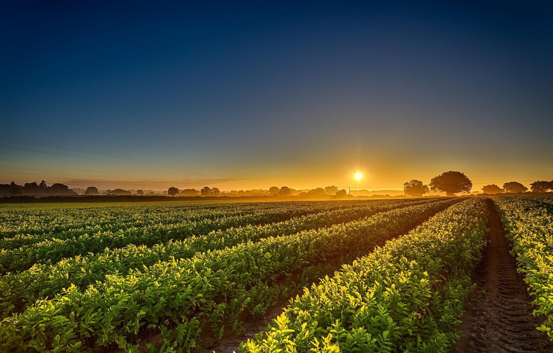 Photo wallpaper field, dawn, morning