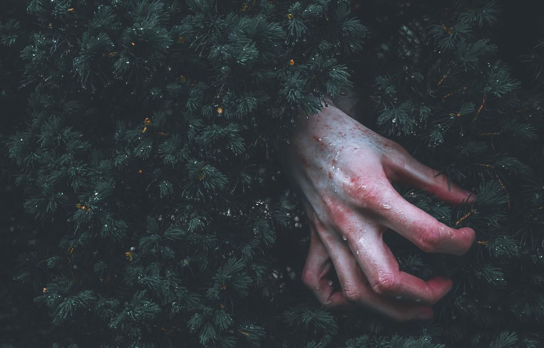 Photo wallpaper drops, branches, rain, hand, needles, tree